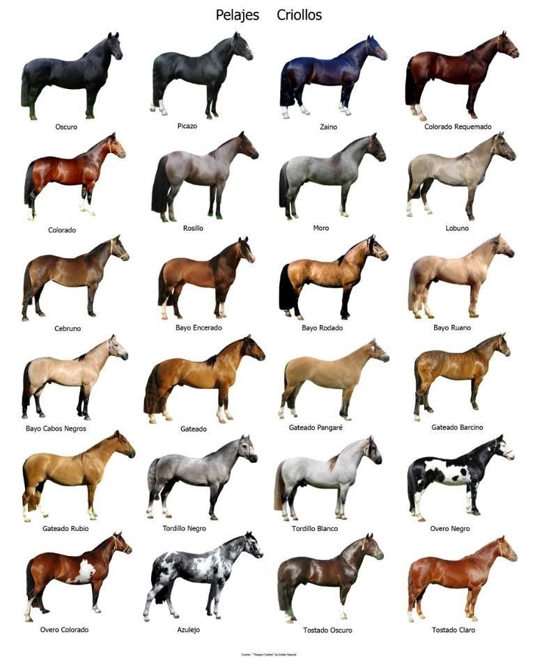 LA PAMPA GAUCHA: Pelagens de cavalos crioulos | animais diversos ...