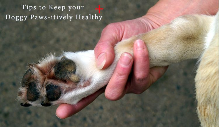 tip for keeping dog s paws healthy yeast infection