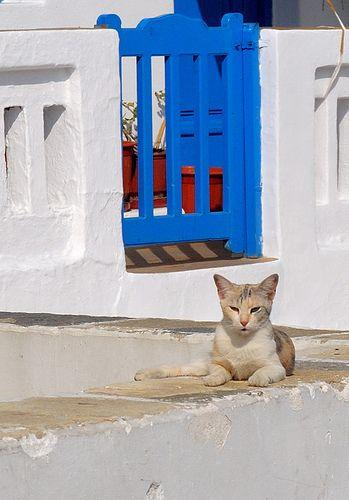 Cats in Greece #1: Mykonos | Flickr - Photo Sharing!
