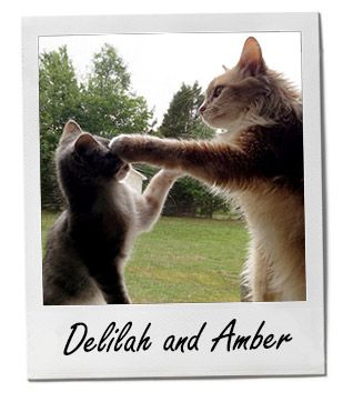 Meet Delilah and Amber, our cute PetsOfTheWeek! cats