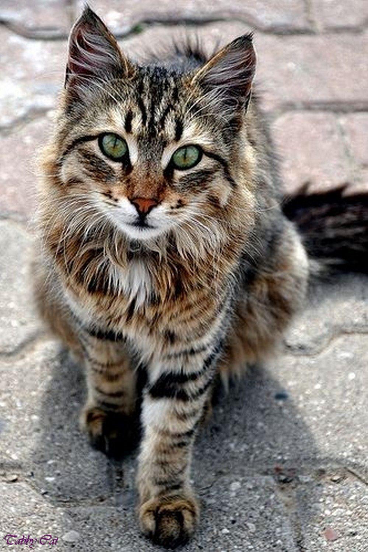 Katze (64)