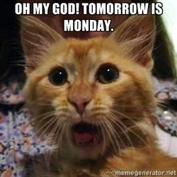 Oh God Tomorrow Is Monday Funny Cat Memes Funny Cat Pictures Funny Cat Faces