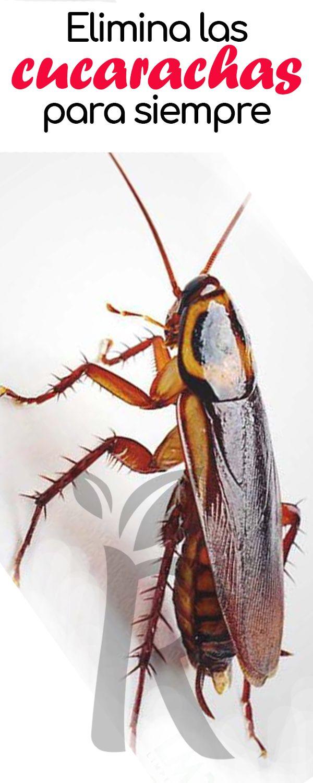 Pin De Mio En Como Eliminar Insetos Cucarachas Eliminar Trucos