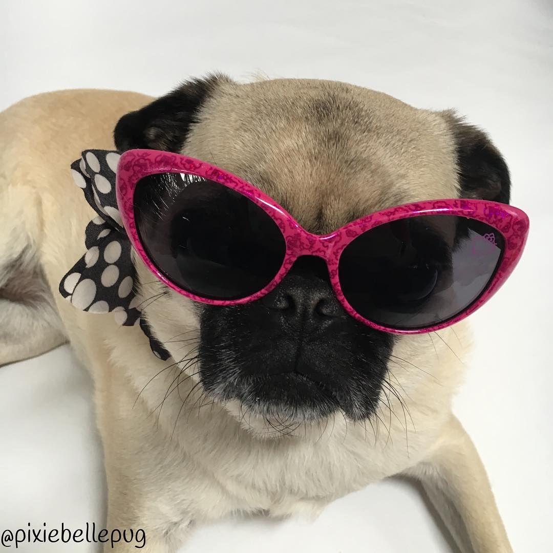 Pin By Lynn Marie On Pugs Cat Eye Sunglasses Instagram