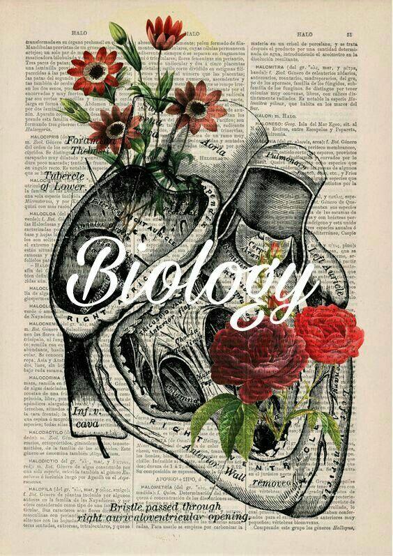 Biology Lab Binder School Motivation Pinterest Anatomy Art