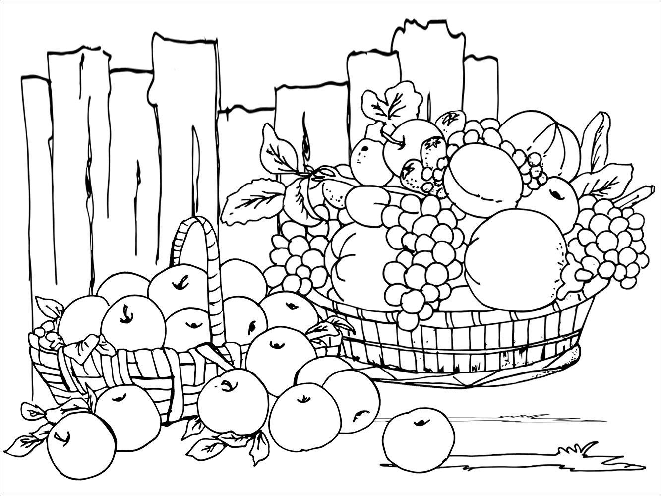 Festival Harvest Colouring Sheet
