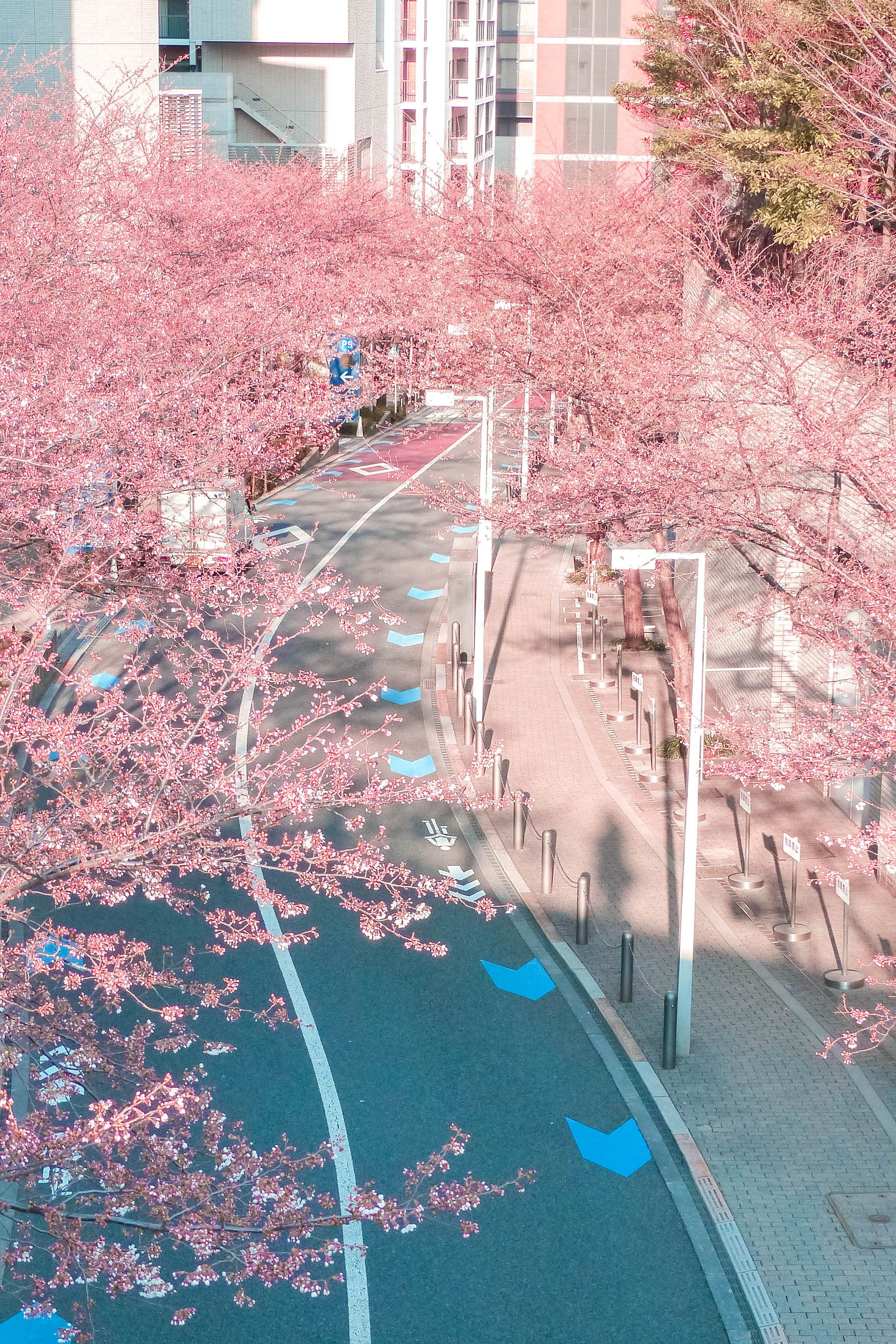 25 Best Places To See Cherry Blossoms In Tokyo Free Guide Anime Scenery Wallpaper Scenery Wallpaper Aesthetic Backgrounds