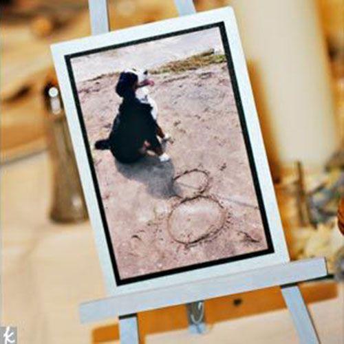 10 Ways to Create a Dog-Friendly Wedding | If It Barks Blog #weddingdog