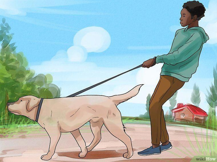 How To Train An Older Dog To Walk Calmly On A Leash 9 Steps