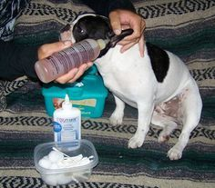 Ear Infections In Dogs How To Clean And Treat Ear Infections In