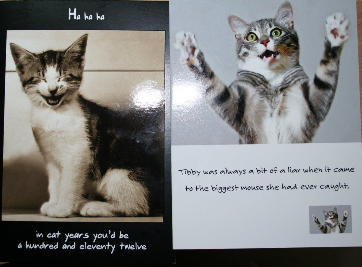 Funny Cat Sayings 10492 Hd Wallpapers in Funny Imagesci