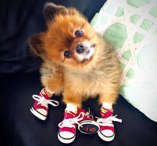 Pictures Of Dogs Wearing Booties