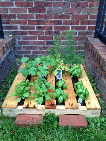 pallet garden from Applegate Farms | Vegetable garden | Pinterest ...