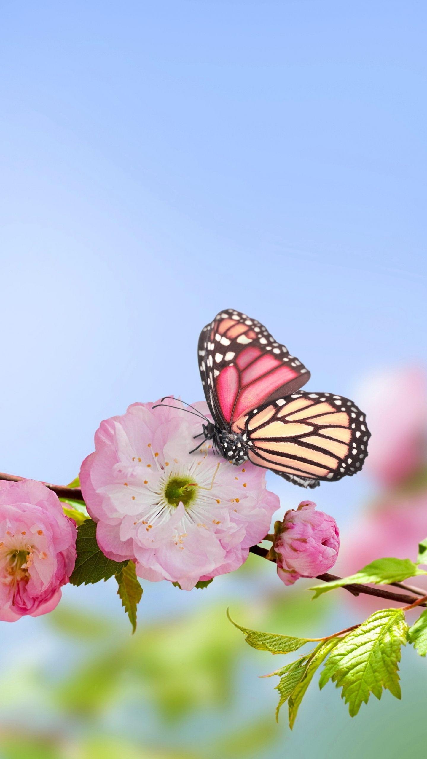 Spring Butterfly Wallpaper Full Hd Outdoors Wallpaper 1080p Butterfly Wallpaper Spring Flowers Wallpaper Flower Wallpaper