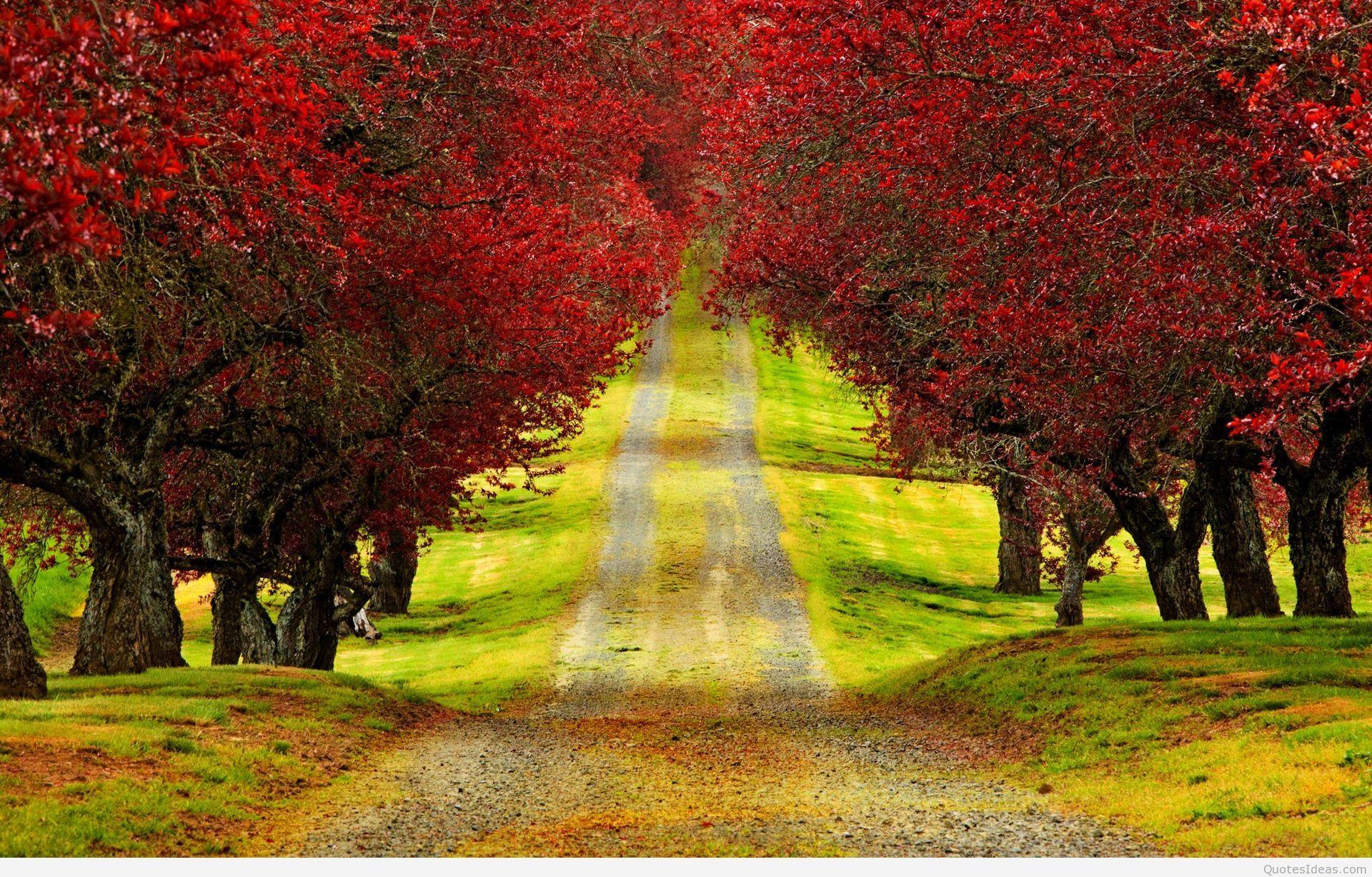 Resultado De Imagem Para Windows 7 Desktop Background Nature Imagens Hd Natureza Hd Samsung