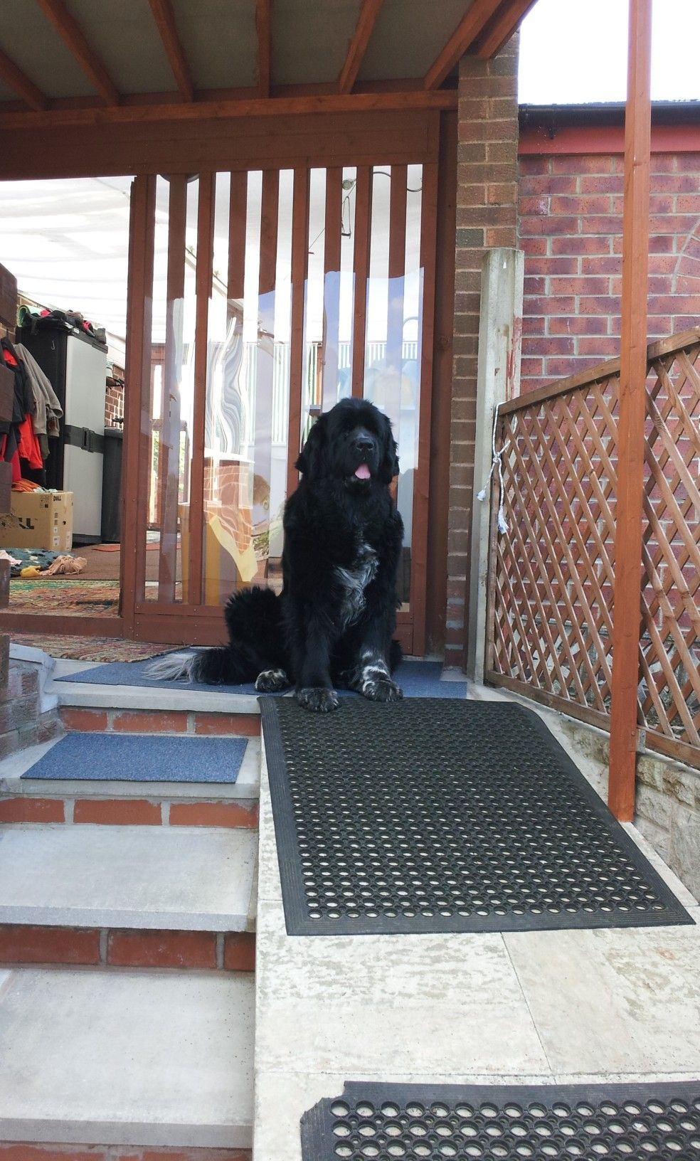 Katie She Had Some Heart Problems And Passed Age 8 Years Newfoundland Dog Newfoundland Dogs