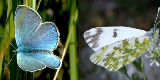 Scoperte due nuove specie di farfalle nelle Isole Eolie
