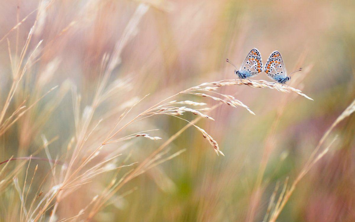 Красивые фотографии с бабочками | Бабочки, Природа, Фотографии
