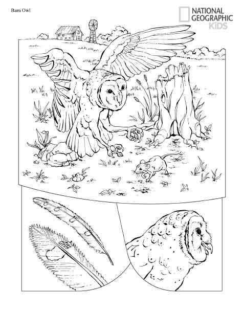 Раскраски с животными (с изображениями) | Книжка-раскраска ...