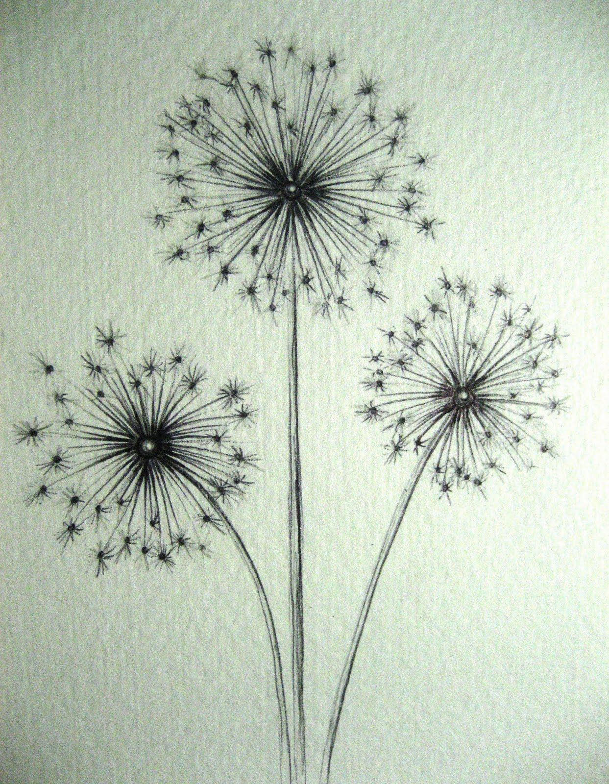 how to draw a dandilion