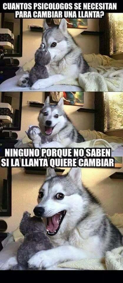 Y Es Verdad No Lo Saben Memes Divertidos Meme Gracioso Humor Divertido Sobre Animales