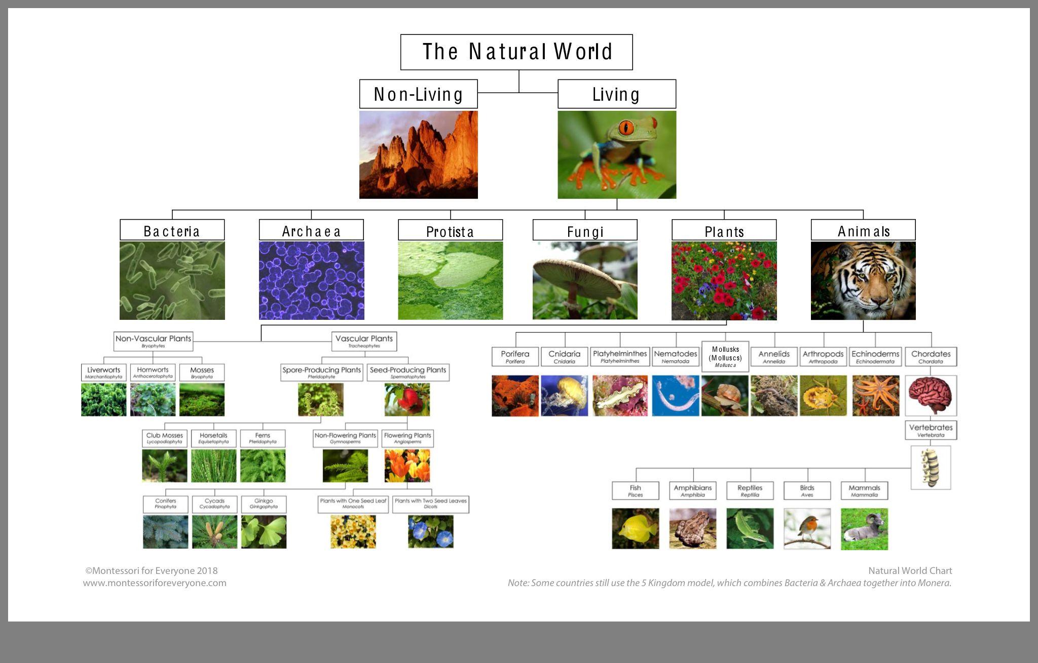 Pin By Stephanie Freeman On Montessori Biology Natural World Nature World