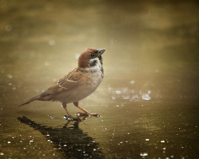 Image result for bird in rain