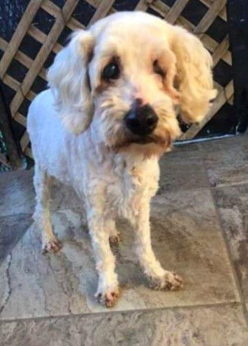 Adopt Susanna Blind And Deaf On Animal Shelter Shirt Pets