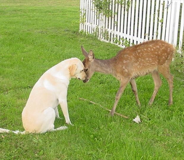 The Dog And Deer Are Friends