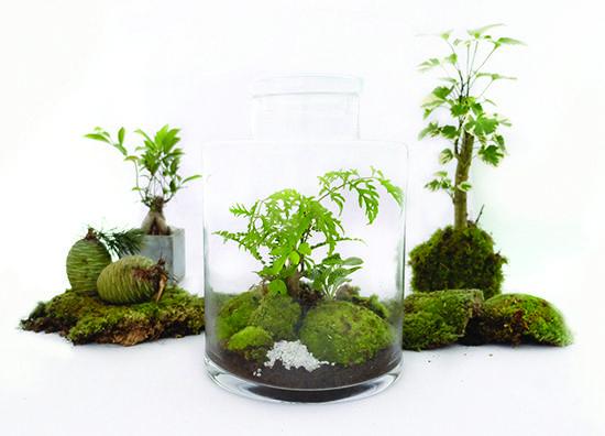 r sultat de recherche d 39 images pour terrarium plante deco. Black Bedroom Furniture Sets. Home Design Ideas