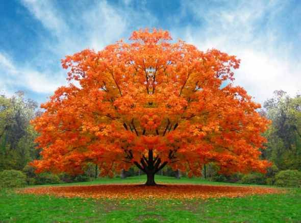 Pin De Carmen G Uevara En Naranja Arboles De Colores Fotografía De árboles árboles En Otoño