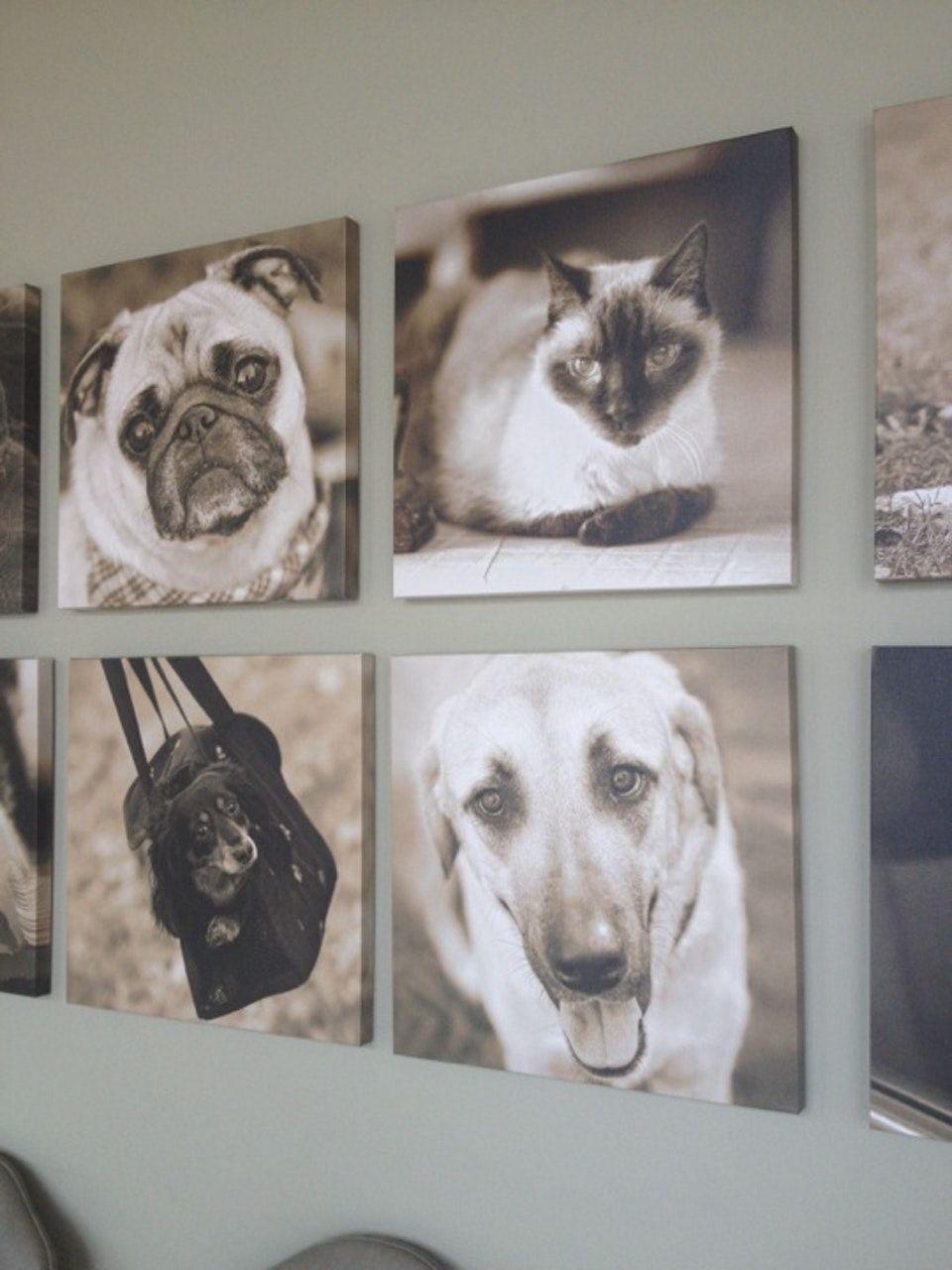 Carolina Veterinary Specialists - Veterinarian in Matthews ...