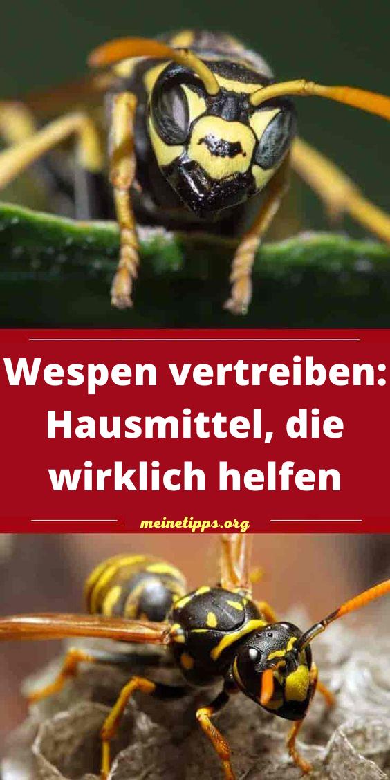 Wespen vertreiben: Hausmittel, die wirklich helfen in 2021 ...