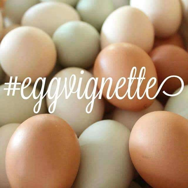 It's time for another #eggvignette.  Doesn't time fly by? To play, just tag me in your description and on your pic, @happydaysfarm, and use the hashtag #eggvignette. I will do a feature on Monday!  Hope you will play along!