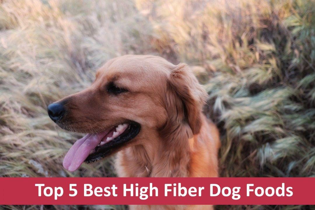 Top 5 HighFiber Dog Foods [Buyer's Guide For 2017