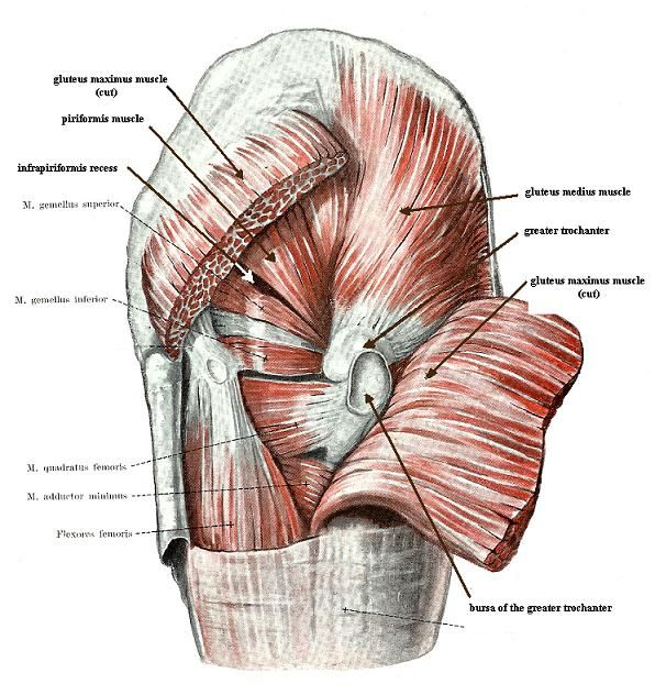 Greater Trochanter Muscle Anatomy Please visit my blog at thomaskiid ...