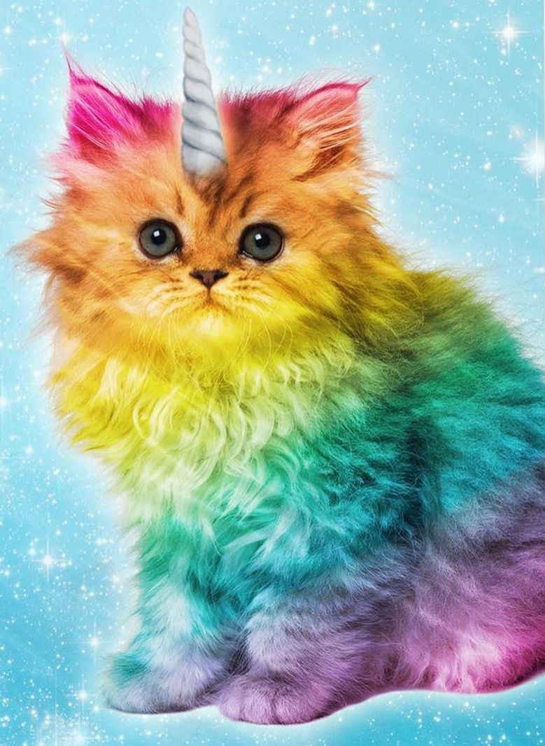 You are as special as a caticorn. Rainbow cat, Cats and