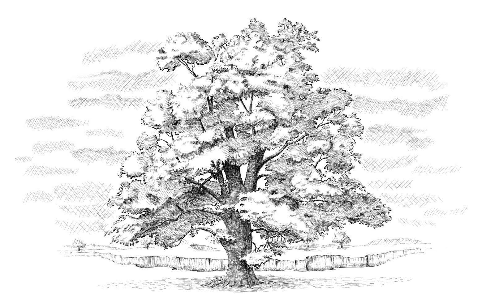 Oak Tree Landscape Sketch Tree Drawing Realistic Drawings