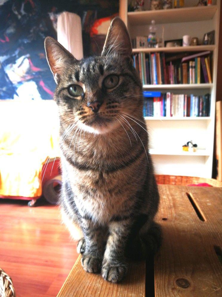 Mamica Animals Cats Furry