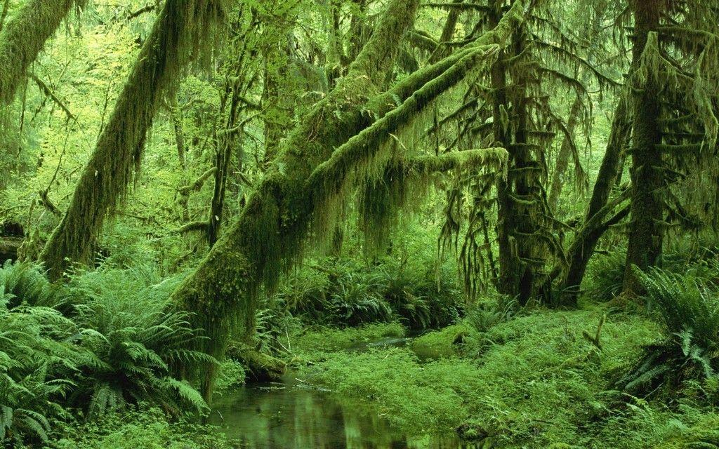 Sami w dzikim lesie