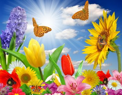 Poze frumoase cu fluturi si flori pentru fete si baieti, imagini ...