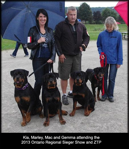 Hamilton Breeder Would Love A Pup From Eddie Or His Son Hogey