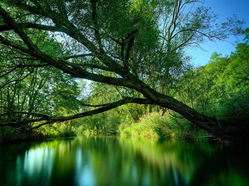 Nature Forest Green Forest River wallpaper