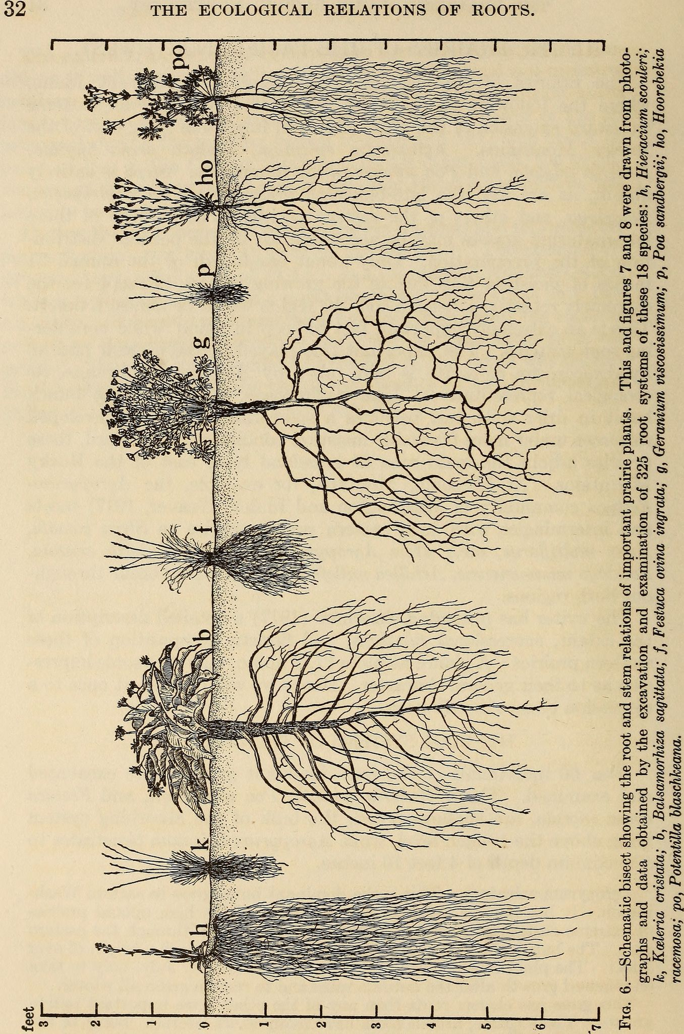 Image from page 45 of the ecological relations of roots 1919 image from page 45 of the ecological relations of roots 1919 sciox Gallery