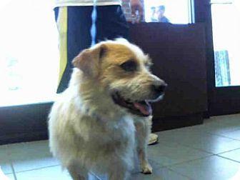 Nashville Tn Cardigan Welsh Corgi Skye Terrier Mix Meet Lucio
