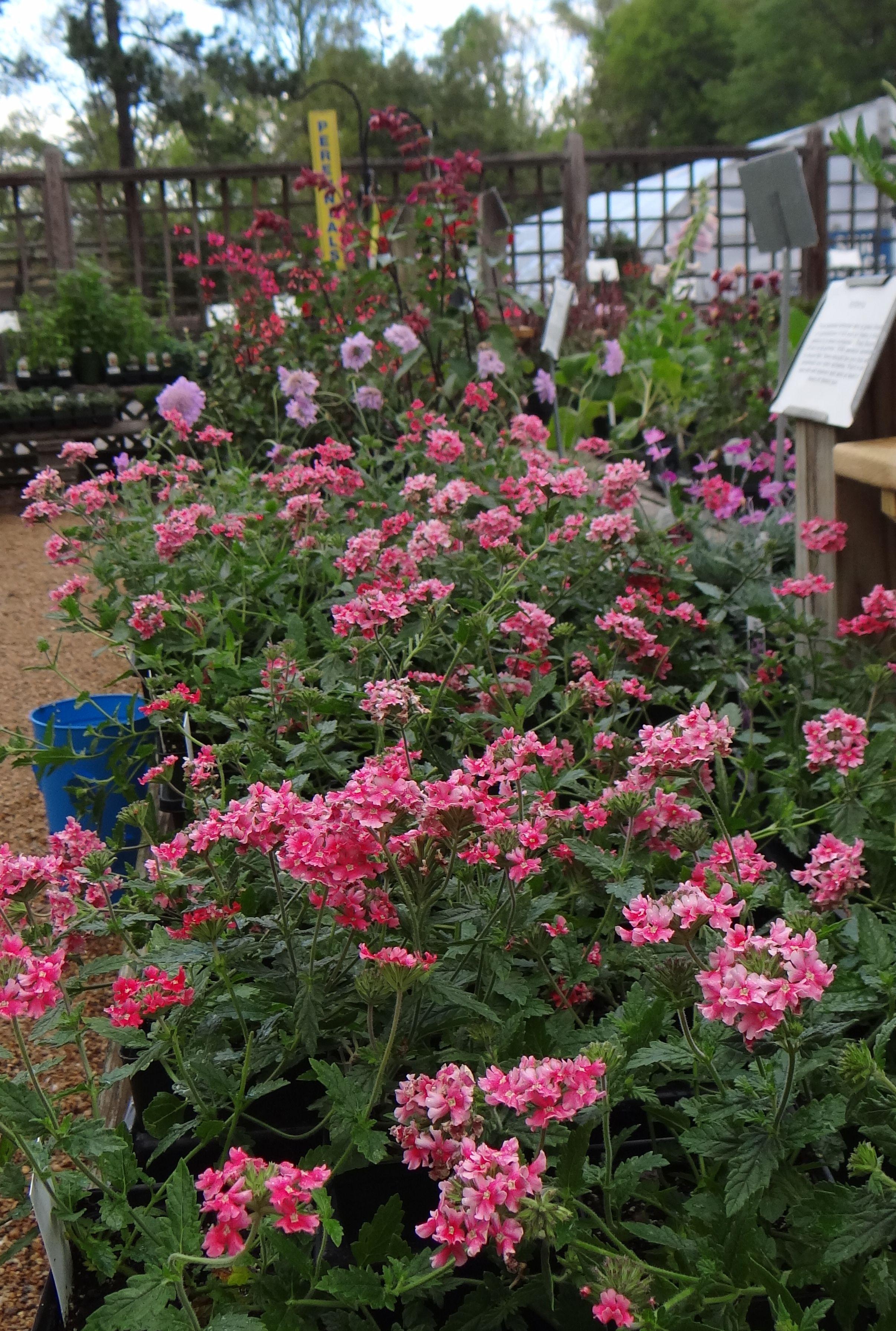 Pretty pink perennials particularly precious huh