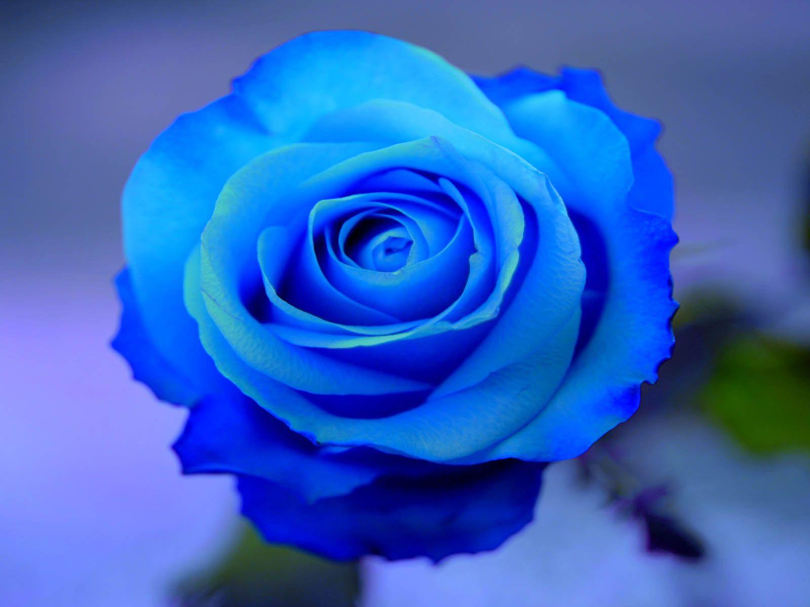 Pretty Blue Flower Backgrounds