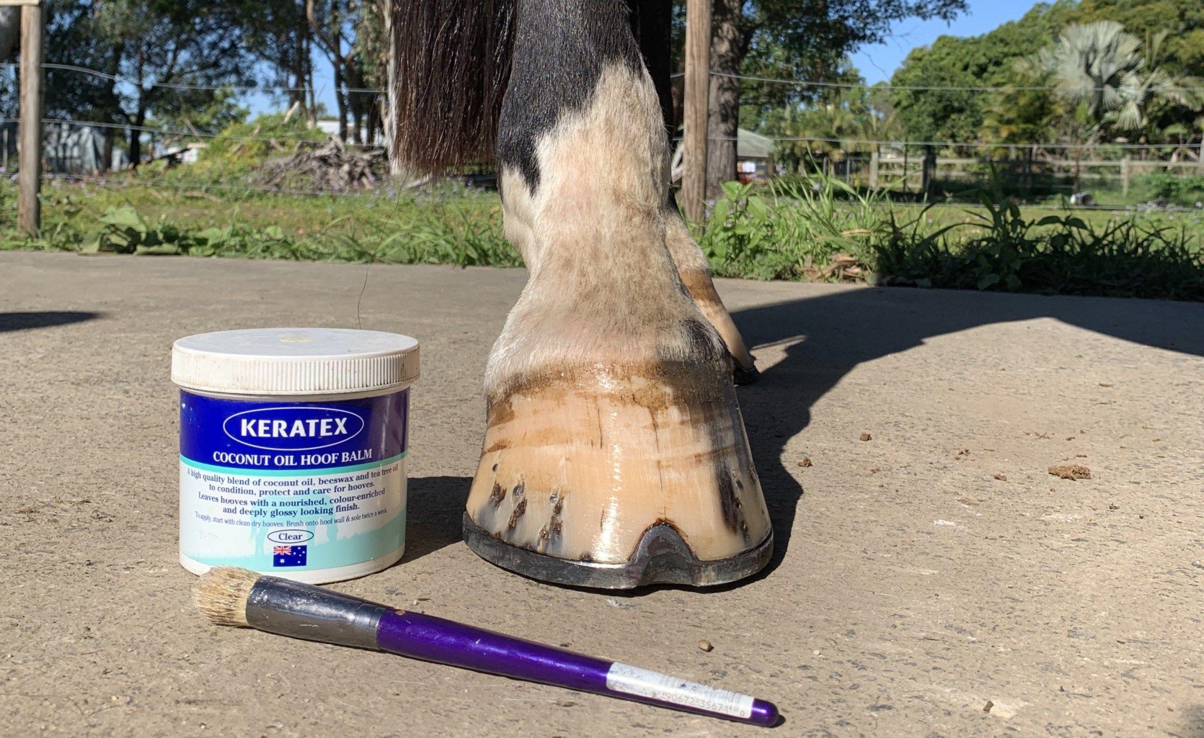 Nonie S Hoof Care Regimen Hoof Care Horse Care Tips Horse Care