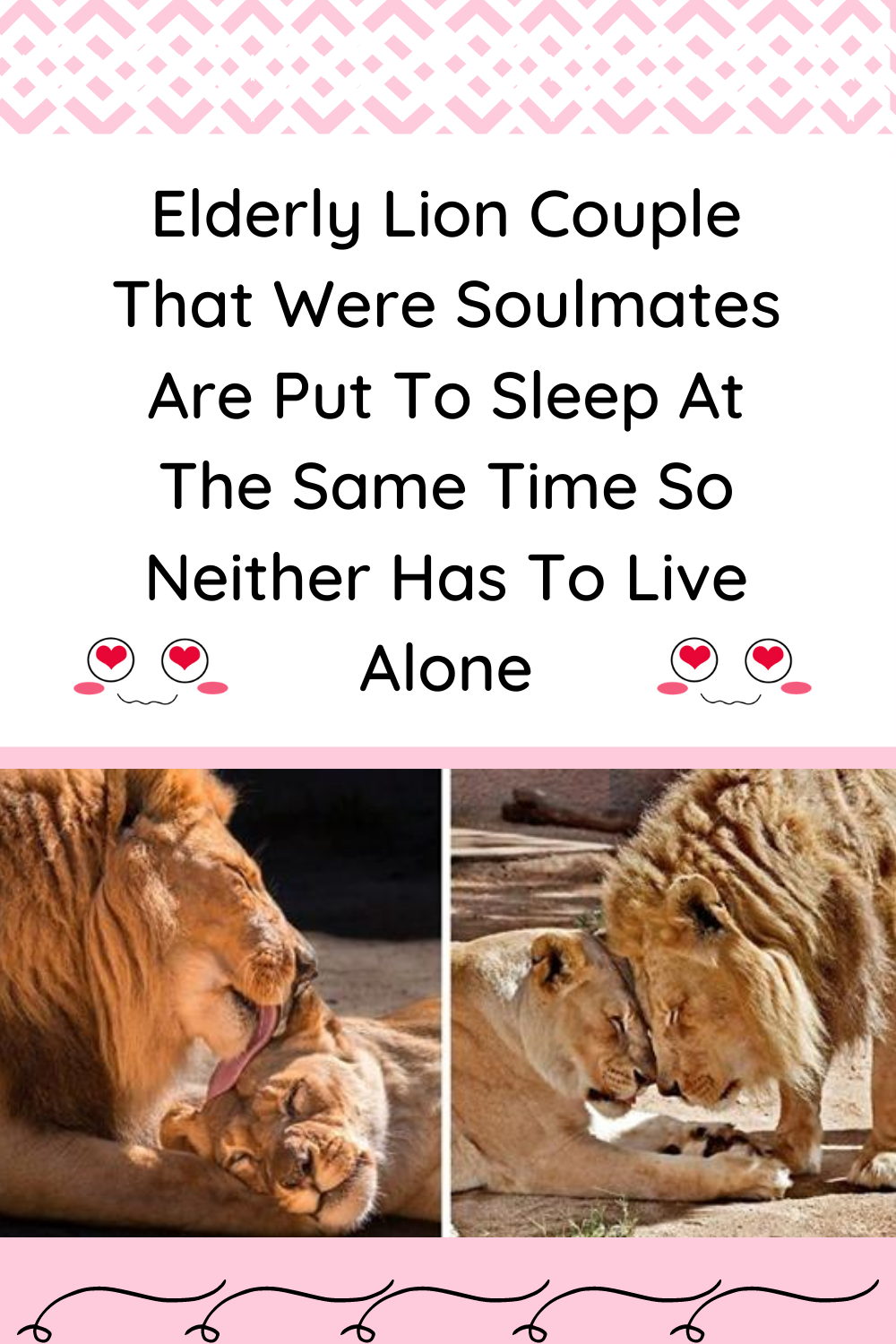 Elderly Lion Couple That Were Soulmates Are Put To Sleep At The Same Time So Neither Has To Live Alone In 2020 Lion Couple Living Alone Elderly
