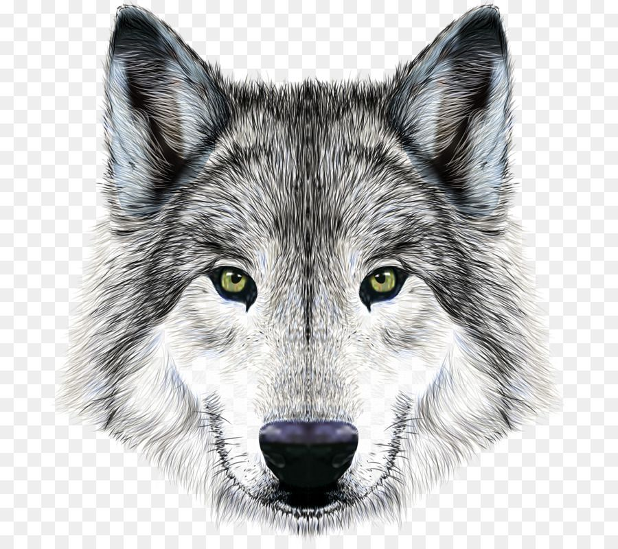 Dog Arctic Wolf Mexican Wolf Illustration Imposing Wolf Png Download 757 800 Free Transparent Dog Png Downloa Wolf Illustration Mexican Wolf Arctic Wolf